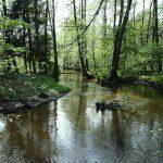 Puszcza Solska – Park Krajobrazowy
