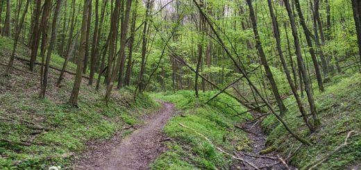 Krzczonowski Park Krajobrazowy - Fot 1