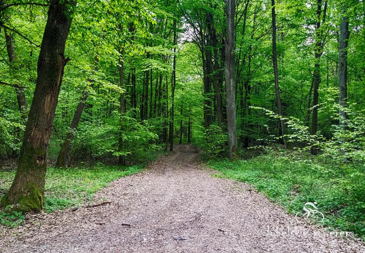 Krzczonowski Park Krajobrazowy - Fot 2