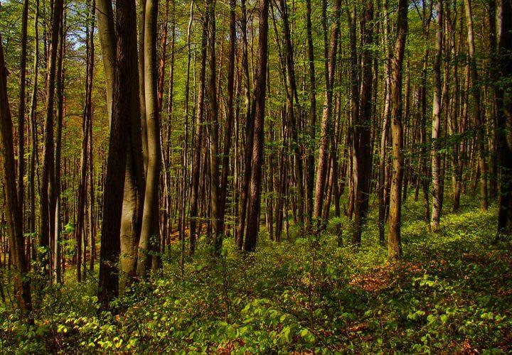 Lasy na Roztoczu