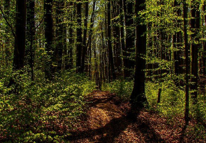 Leśna droga na Roztoczu