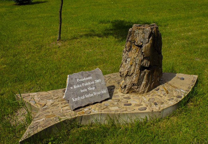 Skamieniałe drzewa w Siedliskach
